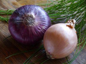 onion-498732_640
