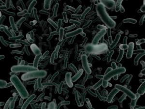 bacterium-virus-micro-110819-l