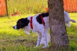 dog-1694209_640